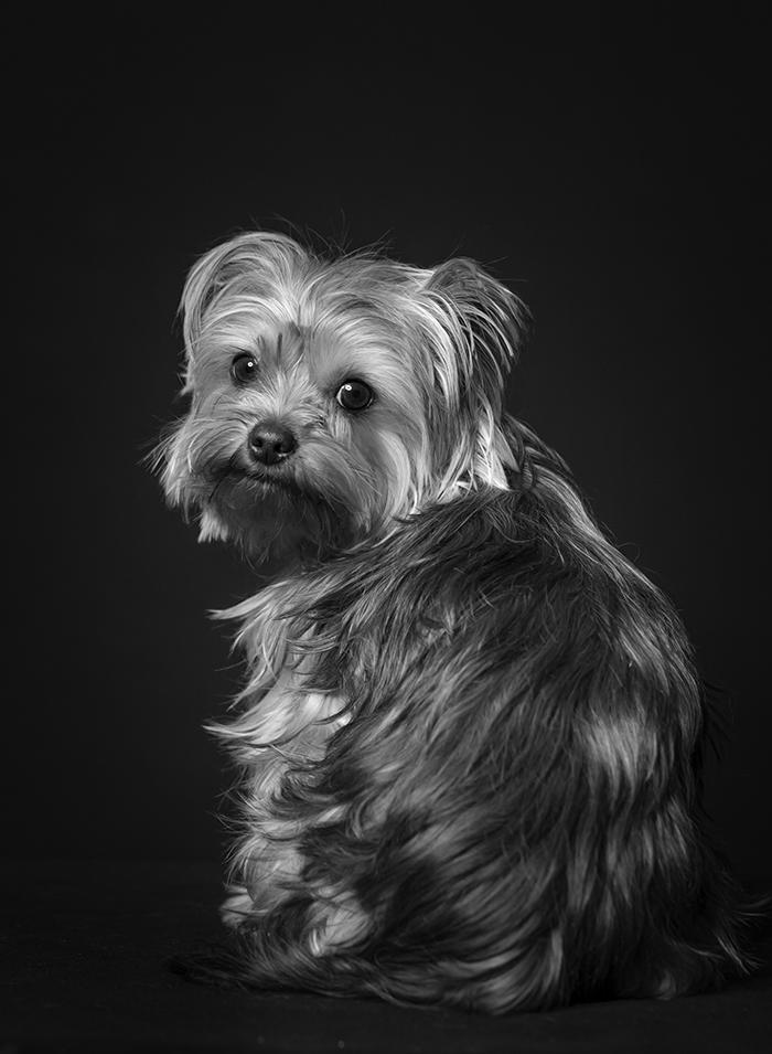 kutya-fekete
